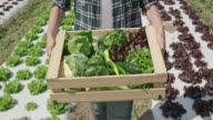Female farmer carrying full wooden produce crate in sunny field video