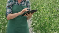 Female farmer entering greenhouse tomato growth data into a tablet video
