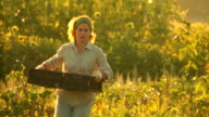 Female farmer harvesting tomatoes video