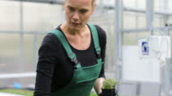 Female farmer holding potted plant in greenhouse video