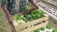 Female farmer picking up wooden crate with vegetables off ground video
