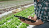 Female farmer using digital tablet in the field of lettuce video