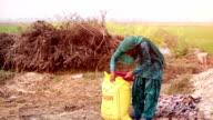 Female farmer working in the field video