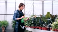 Female florist spraying flowers in greenhouse video