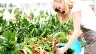 HD: Female Florist Watering Flowers. video