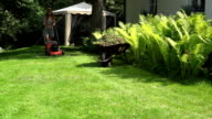 female gardener in shorts and bra pushing lawn grass mower near fern. FullHD video