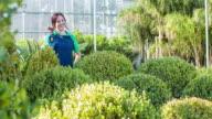 Female gardener shaping the plants at garden center video