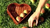 female hand put pear fruit heart shape basket on green grass. video