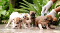 Female hand washing puppy dog video
