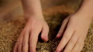Female hands enjoying touch of harvested rye grain, organic farming product video