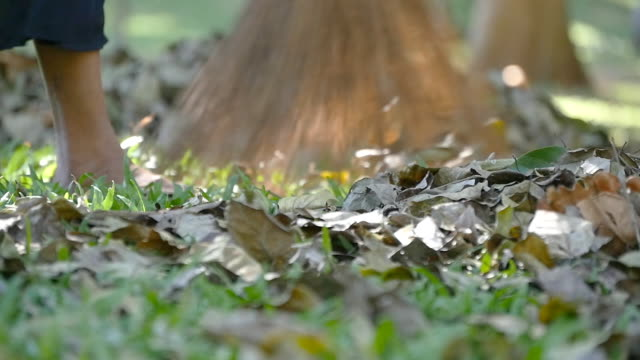 Female indian janitor in the park sweeps the leaves rakes during the day. CleaninFemale indian janitor in the park sweeps the leaves rakes during the day. Cleaning area from fall leaves. Slow motiong area from fall leaves. Slow motion video