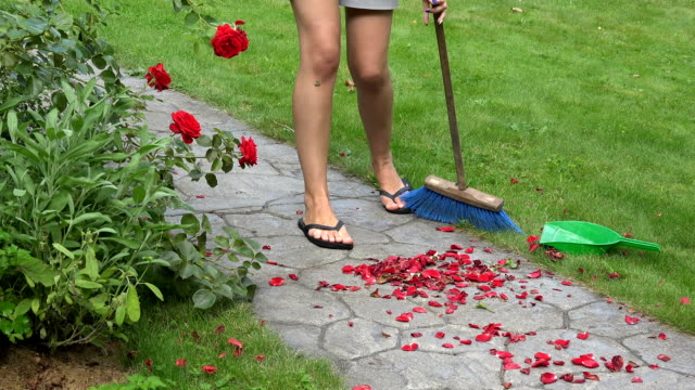 female landscaper woman sweeping fallen rose petals with from stone cobbled path in yard video