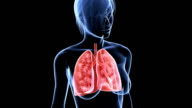 female lung video