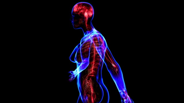 Female Nervous system video