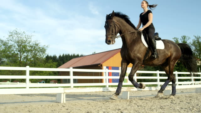 SLOW MOTION: Female on beautiful dark bay horse riding canter in outdoor manege video