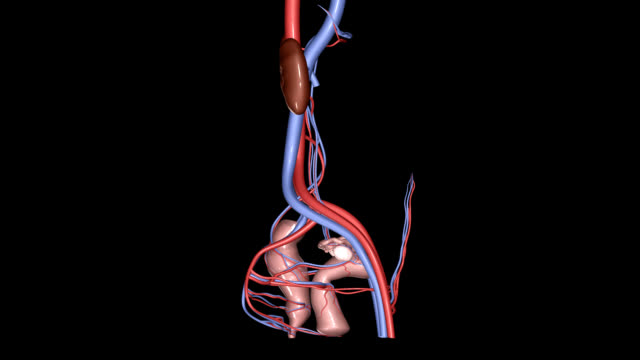 Female Reproductive System HD, NTSC, PAL video