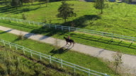 AERIAL: Female rider walking with horse and dog on beautiful sunny day video