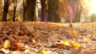 Female runner jogging in park in sunny autumn park video