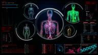 Female scanning blood vessel, lymphatic,  circulatory system in digital display video