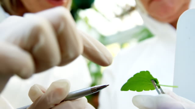 Female scientists researching leaf video