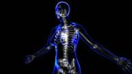 Female skeleton video
