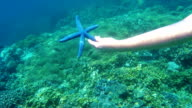 Female swimmer with underwater camera receives starfish video