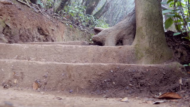 Female tourist with backpack going down on stony stairs in tropical park. Young woman walking down stairway. Girl stepping at forest trail during travel vacation. Low angle of view Close up video