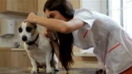 Female vet opens dog's ear by her hand video