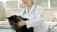 Female Veterinarian Physician Examining A Cat video