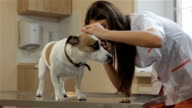Female veterinarian uses medical tool to check up the dog's ear video