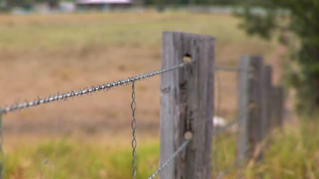 fence post focus video