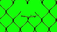 fence turn in to birds chromakey video