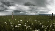 fence,flowers,storm,field video