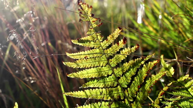 Fern and vegetation shacked by wind video
