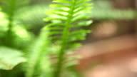 Fern blowing in breeze on home backyard patio. video