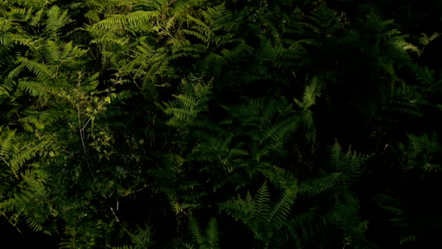 AERIAL: Fern in forest video