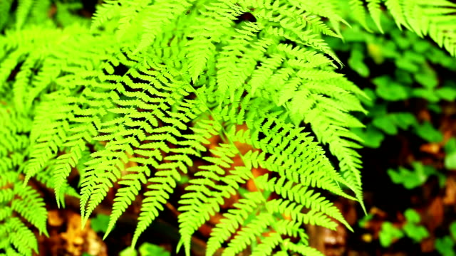 Fern in forest video