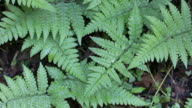 Fern leaf in the forest video