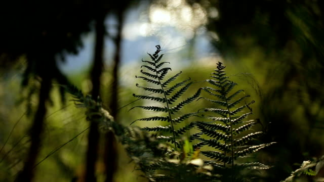 fern leaves at the background of flowing stream forest landscape video