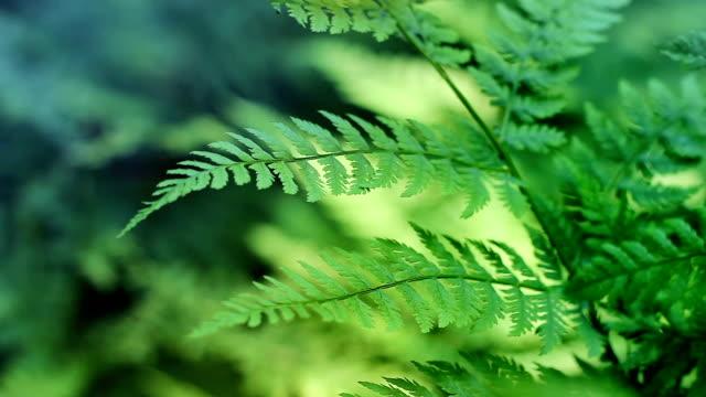 Ferns In Breeze Loop video