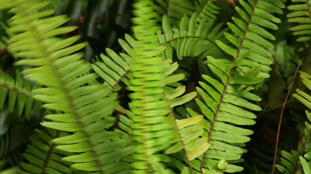 Ferns in the breeze video