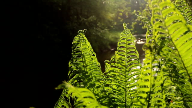 Ferns in the forest video