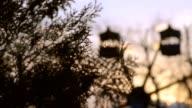 Ferris wheel at sunset and tree Thuja video