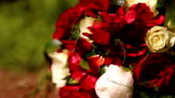 Few roses and background of bokeh video
