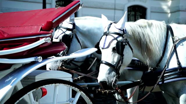 Fiaker horse video