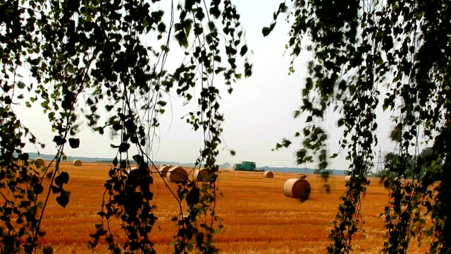 field and the hay bales on it after harvest video