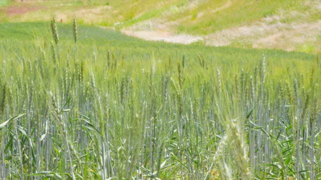 Field Grass video
