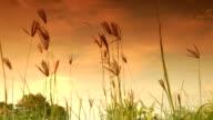 field in evening video