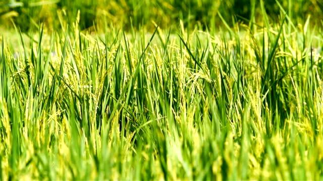 Field in the win. video
