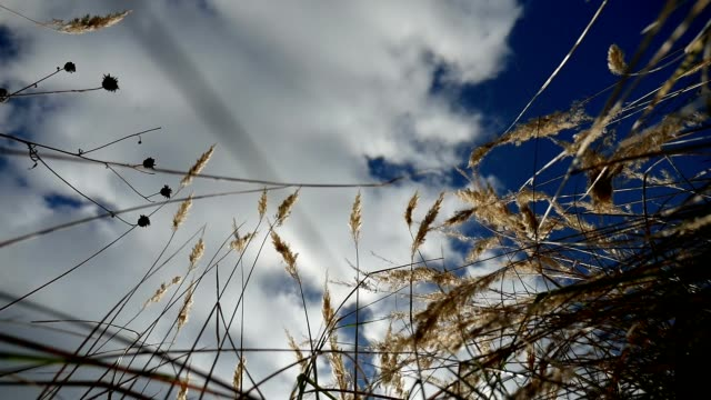 field lonely dry grass in the field on background of blue tree sky autumn nature video